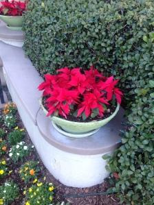 wpid-Photo-Dec-27-2012-412-PM.jpg